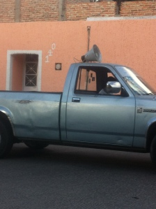Tamale Truck