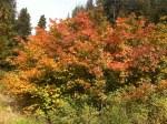 It's Fall…………My FavoriteSeason