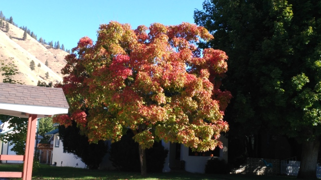 My Tree Cashmere (2)