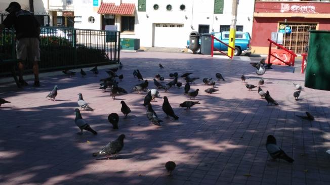 Zaragoza Park (2)